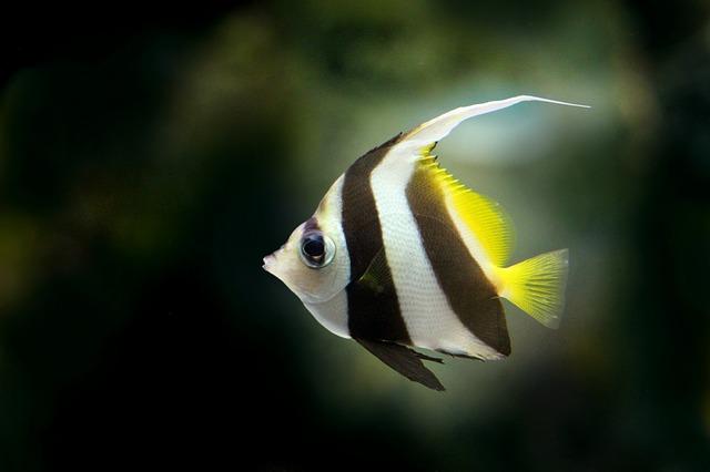 plochá ryba