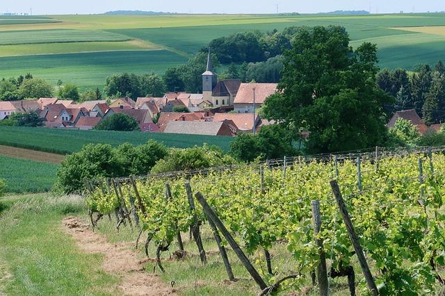 Úrodné vinice