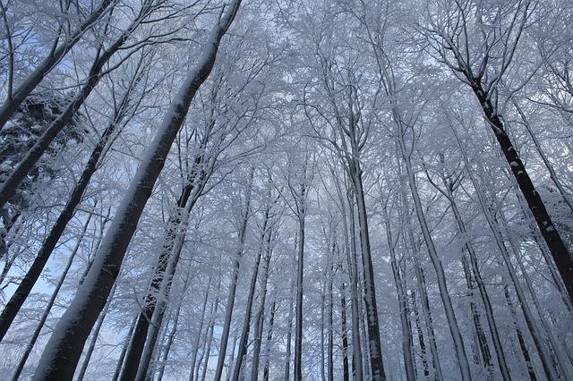 Pustevny v zimě.jpg